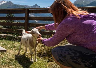 Découverte des chèvres de la ferme pédagogique (Photo A.Pernet)